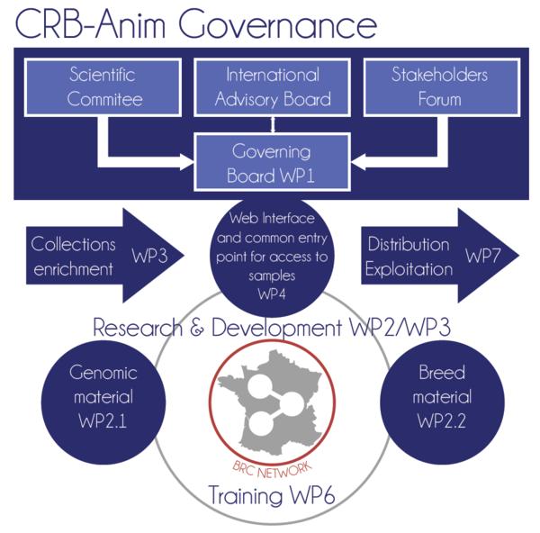 CRB Anim Governance