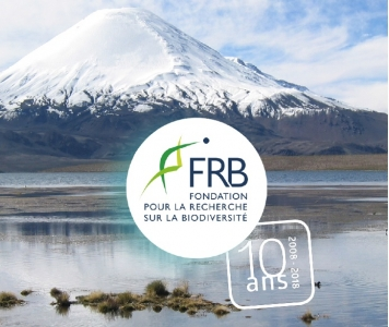 10 years for FRB